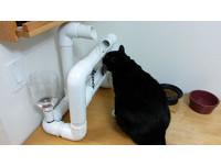 貓奴工程師燃燒「設計魂」 幫喵星人製造超酷飲水機