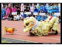 【有影音】校犬「可樂」亂入舞獅表演:你是什麼生物!