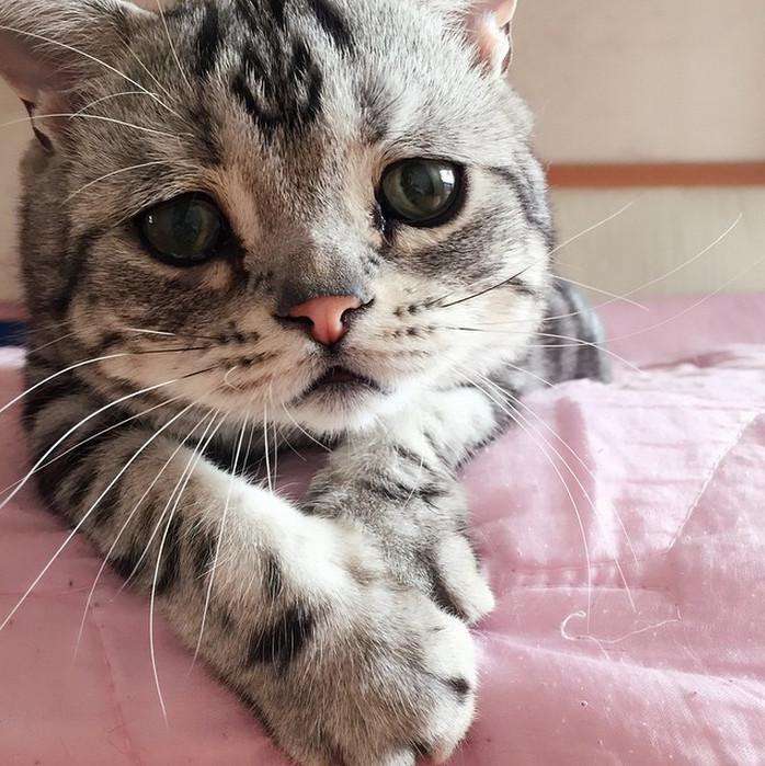 憂傷眼神無辜臉龐惹人愛 「世界最可憐貓」爆紅