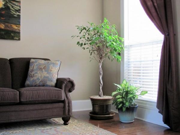 免空氣清淨機! 室內必放5種會「吸毒」的植物