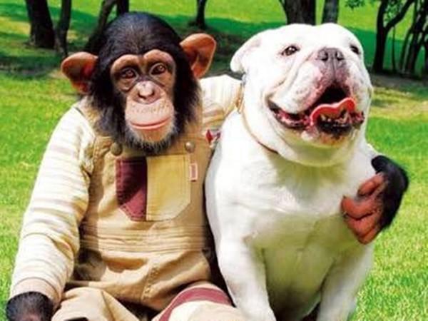 再也抱不了你!狗麻吉詹姆斯離世 猩猩小龐變孤單