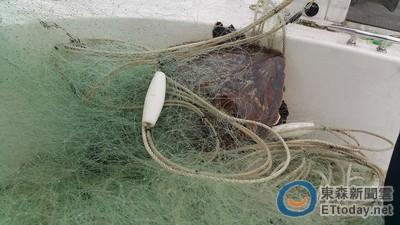 基隆綠蠵龜遭網纏身險喪命 又是海洋殺手「流刺網」害的!