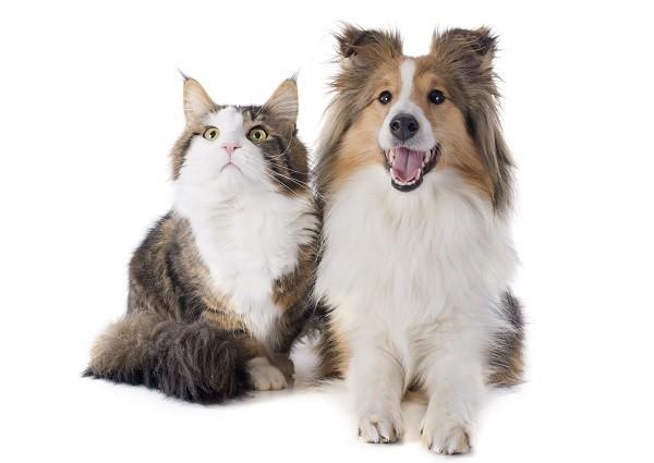 貓,狗,貓狗,相處(圖/達志/示意圖)