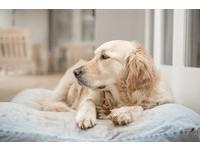 毛孩罹癌只能安樂死? 飼主別放棄!寵物抗癌藥物新上市
