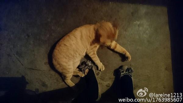 貓被趕出家門蹲樓梯癡等主人 暖心住戶寫封信幫牠找新家