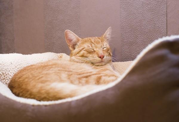 猫,喵星人,宠物,睡觉(图/达志/示意图)