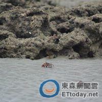 莫多藻礁世紀殺手圈:儘快將大譚阿爾吉礁劃為自然景觀