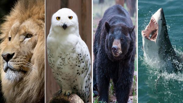 【測驗】你跟哪種動物最像?從行為模式看生存本能