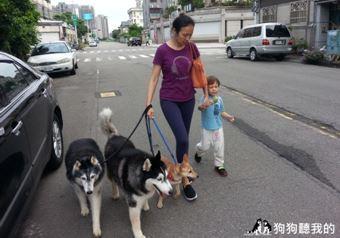 ▲奪回「老大」位置! 解決「強勢狗狗」的分離焦慮(圖/Annie老師提供)