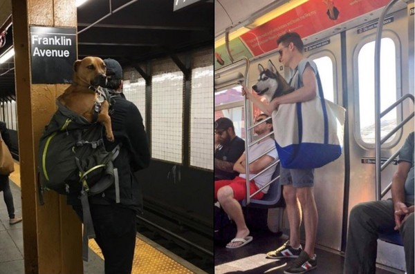 ▲狗狗上紐約地鐵。(圖/翻攝推特)