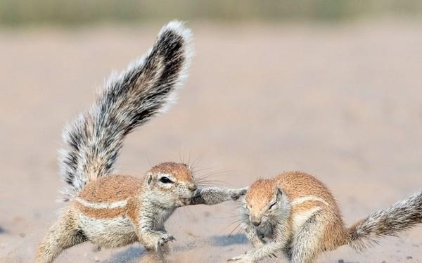 松鼠巴頭讓朋友吃土。(圖/翻攝自Caters/Hendri Venter)