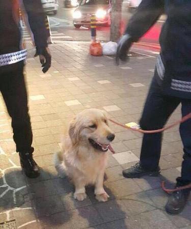 ▲釜山黃金獵犬搶超商。(圖/翻攝自부산경찰)