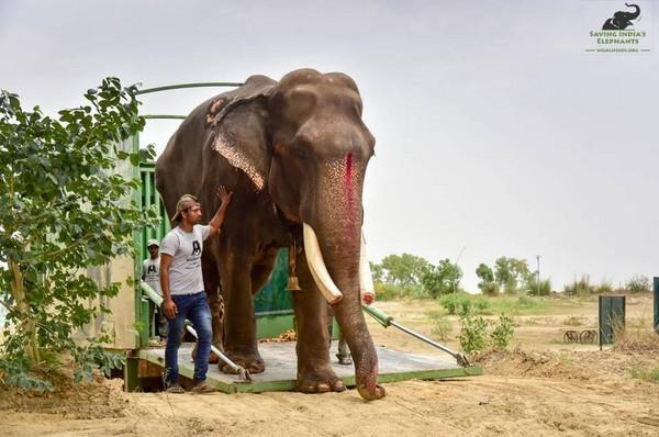 ▲▼70歲老象「Gajraj」被禁錮了58年,全身受虐的牠終於重獲自由。(圖/翻攝自「Wildlife SO」臉書)