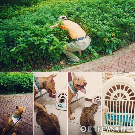 ▲散步撿到小喵!「貓奴狗」秒變暖爸 天天抱睡還長出父子臉。(圖/「天生一對 治癒犬與愛人貓」提供)
