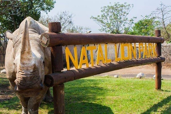 犀牛在睡夢中被殺,南非動物園PO文哀悼。(圖/翻攝自Natal Lion Park粉專)