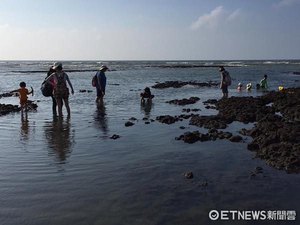 ▲藻礁池在炎炎夏日已成小朋友戲水消暑的好地方。(圖/臉書珍桃園藻礁提供)