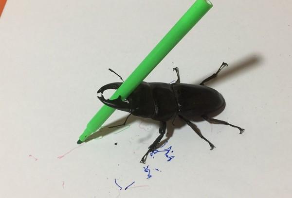 ▲甲蟲Spike夾住畫筆,發揮繪畫本領!(圖/翻攝自Twitter/Spike the Beetle)