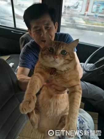 ▲司機阿伯帶「鞋貓副駕」趴趴走 抱起來得意炫:牠很漂亮齁!。(圖/網友Ariel Liu提供)