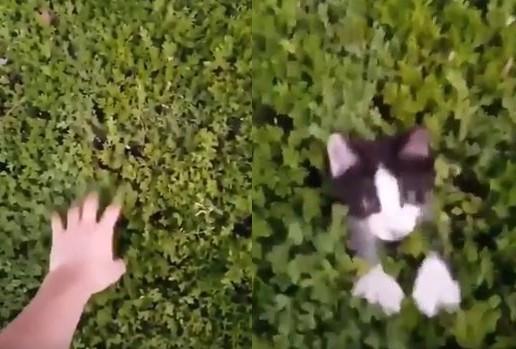 ▲無聊搔搔路邊草叢... 野生小貓「地鼠式」萌彈出!。(圖/翻攝自推特 @m_yosry2012)