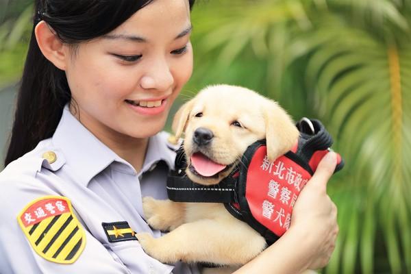 ▲新北市小警犬,福星。(圖/翻攝自NPA 署長室)