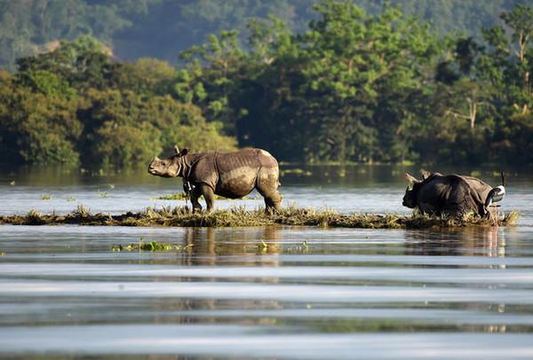 ▲印度92頭野生動物死於水災。(圖/路透社)