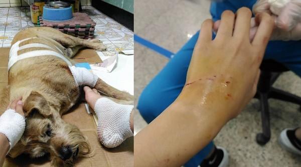 ▲有網友溜狗時突然遭到一隻比特犬攻擊,將她及毛孩咬傷。(圖/翻攝爆料公社)