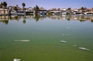 東灣兩個湖泊接觸藍藻警報重新開放游泳