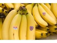 「蕉」頭爛額的政府 國產香蕉價崩夢魘何時休?