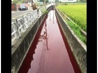私排廢水!后里排水溝「血流成河」2km 網怒:太誇張