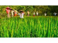 用納稅人錢養「假農民」!台灣竟有上萬人偷吃農保