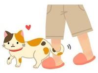 用尾巴繞你的腳? 貓貓真心話:要「宣示主權」啦喵!