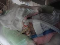 出生跟「小老鼠」一樣大 蘇巧慧的巴掌仙子已有132cm高