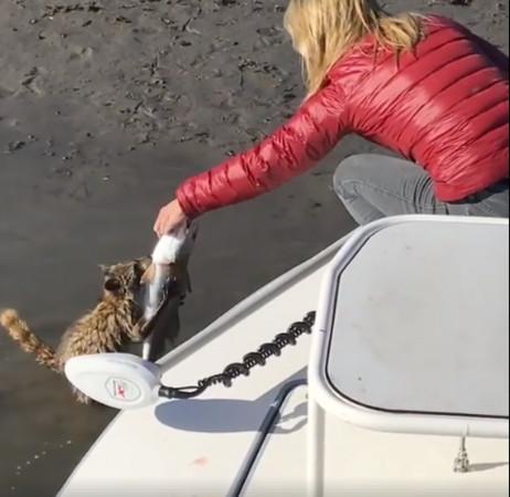 ▲▼強盜!女子釣魚獵物遭搶 浣熊緊抓不放:可以給我嗎?。(圖/取自Meredith McCord臉書)