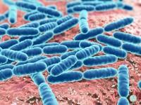 抗癌、抗憂鬱、避免肥胖...「乳酸菌」原來有8大健康益處