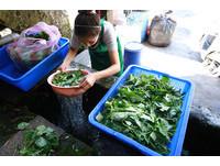 小蘇打和醋可洗蔬果農藥?酸鹼不同、分解速度有差!