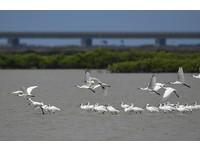 2017黑面琵鷺親子輕旅行 吸引來近200位親子參與