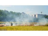 賴清德才說加強取締燒稻草 農民不理…今早繼續燒!