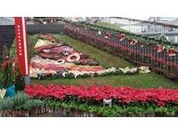 聖誕節來內湖花市免費拿聖誕紅!還有青農市集可以逛