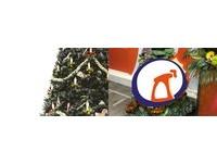 「高纖維聖誕樹」堆滿10層綠 網超心動:想幹走一顆!