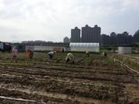 一出車站就能買到新鮮小農產品!樹林有機農夫市集開幕