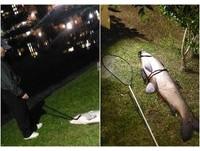 碧湖公園釣到「120公分水怪」巨魚!內湖人嚇圍觀 網爆出恐怖故事