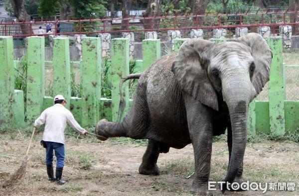 非洲象阿里當39年跟屁蟲! 「保育爸爸」退休恐心碎
