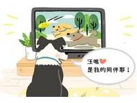 狗狗超愛看電視?牠們真看得懂? 「背後奧秘」大公開!