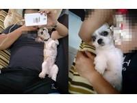 男友「排斥狗狗」怨會過敏 幾個月後她傻眼:怎麼換我沒地位了QQ