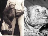 「人猩混血」寶寶百年前曾成功誕生 美學者:科學家殺了牠