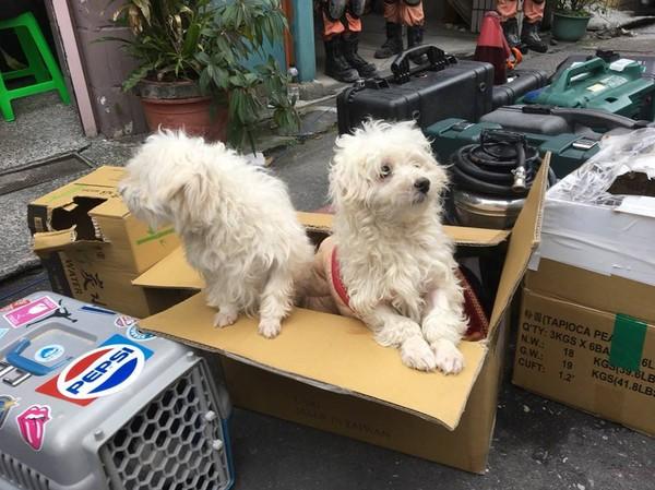 ▲▼中華民國紅十字會從雲門翠堤大樓救出2隻瑪爾濟斯和1隻黃金獵犬。(圖/翻攝自中華民國紅十字會臉書粉絲專頁)