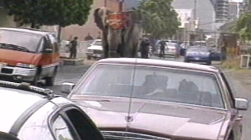 一頭叫「泰克」(Tyke)的大象在表演中發狂,踩死了訓獸師並導致13人受傷,牠事後被開近100槍,全身是血慘,如今24年過去仍震撼人心。(圖/翻攝「善待動物組織PETA」YouTube)