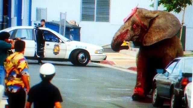 一頭叫「泰克」(Tyke)的大象在表演中發狂,踩死了訓獸師並導致13人受傷,牠事後被開近100槍,全身是血慘,如今24年過去仍震撼人心。(圖/翻攝「亞洲善待動物組織PETA ASIA」網站)