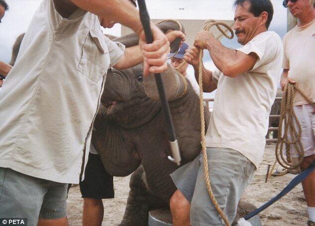 亞洲善待動物組織(PETA ASIA)呼籲拒騎大象。(圖/翻攝亞洲善待動物組織網站)