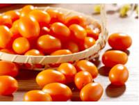帶有橙香迷人風味 爆甜橙蜜小番茄產季促銷中